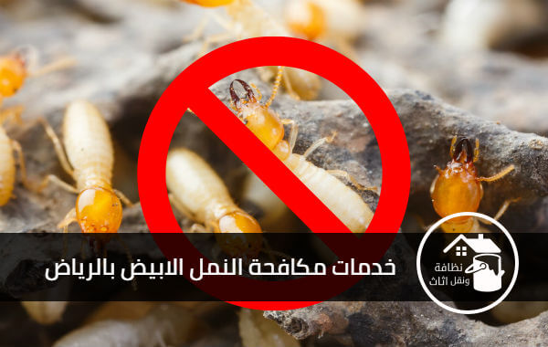 شركة مكافحة النمل الابيض بالرياض, افضل شركة مكافحة النمل الابيض بالرياض, مكافحة النمل الابيض بالرياض, شركة النمر لمكافحة النمل الابيض بالرياض